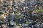 В близък план каменната настилка и бордюрите на алеите са разбити