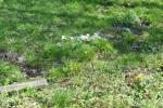 На някои места са се оформили струпвания, сякаш са сметища